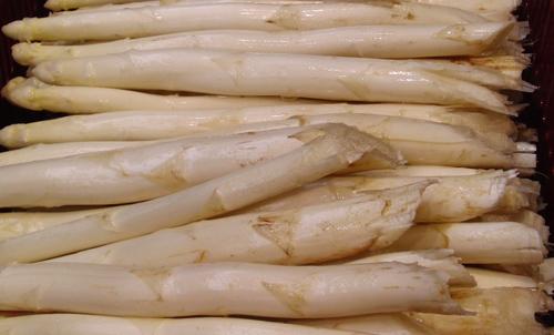 Spargel Weiß